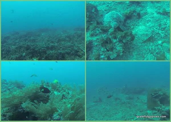 Tons of underwater fun.