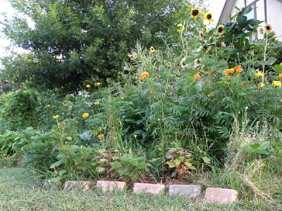 From the foot of terrace one with its 6-foot tall sunflowers, the house can barely be seen.