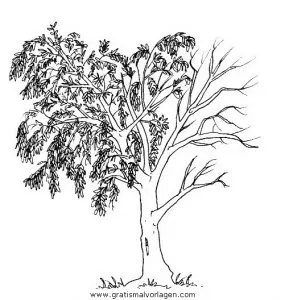 Baume 15 Gratis Malvorlage In Bume Natur Ausmalen