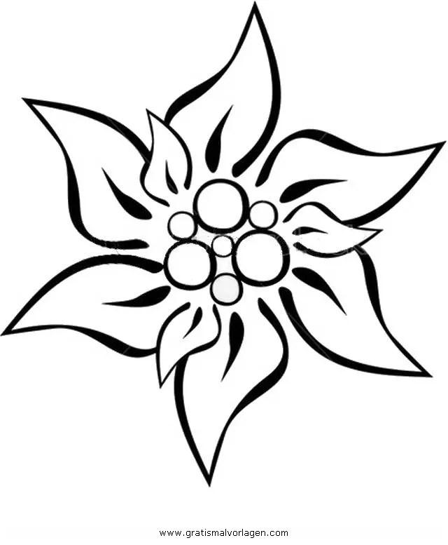 Edelweiss 3 Gratis Malvorlage In Blumen Natur Ausmalen