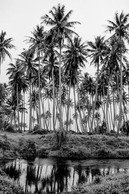 6 Blanco y negro con una fotografía magica, esto es Seb Zanella