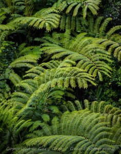 Hawaii Bamboo Forest