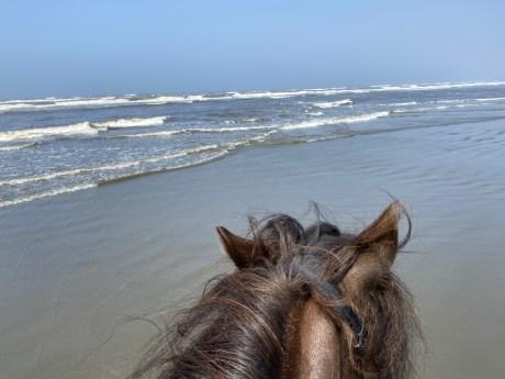 Horseback riding grays Harbor 1