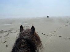 Horseback riding grays Harbor