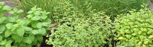 herbs copy