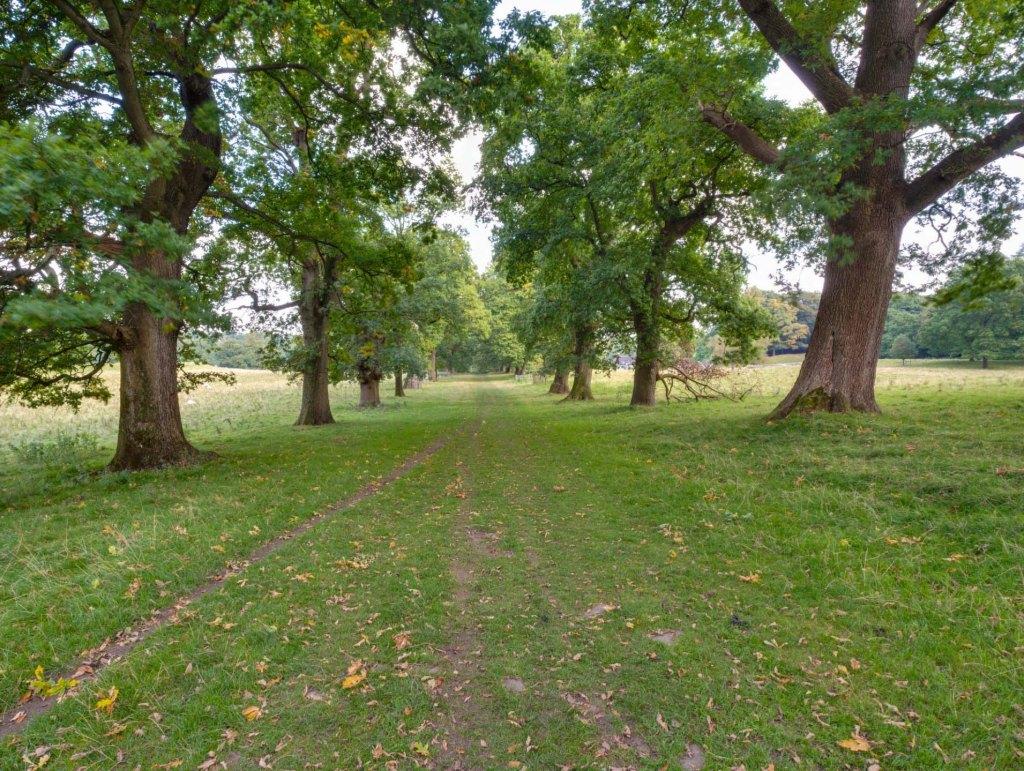 Oak trees in Levens Park, near Kendal Cumbria