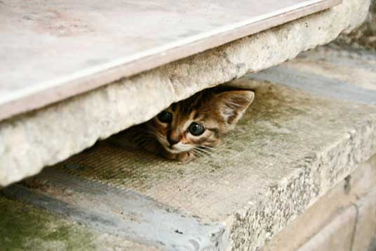 Image result for kitten hiding