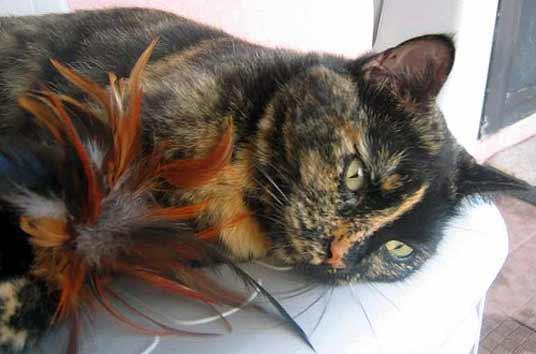 https://i1.wp.com/www.great-pictures-of-cats.com/image-files/tortoiseshell-cat-3.jpg