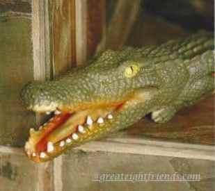 HOT HAVANA IN MIAMI Alligator marked