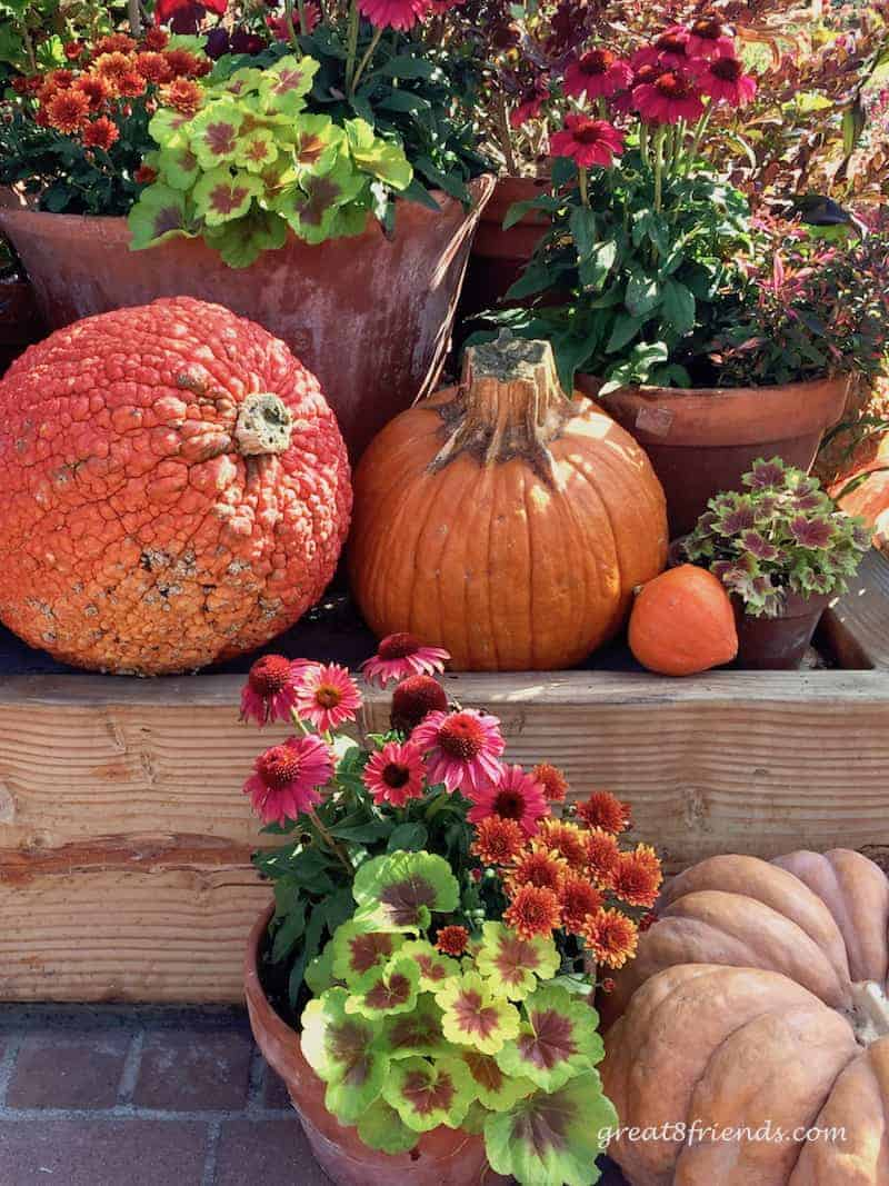 Why does everything become all things pumpkin when October rolls around? We have the history and some Gr8 Recipes for your October!