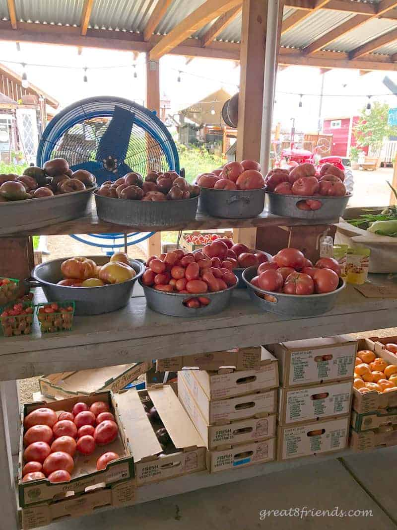 Vegetables at Manassero farms