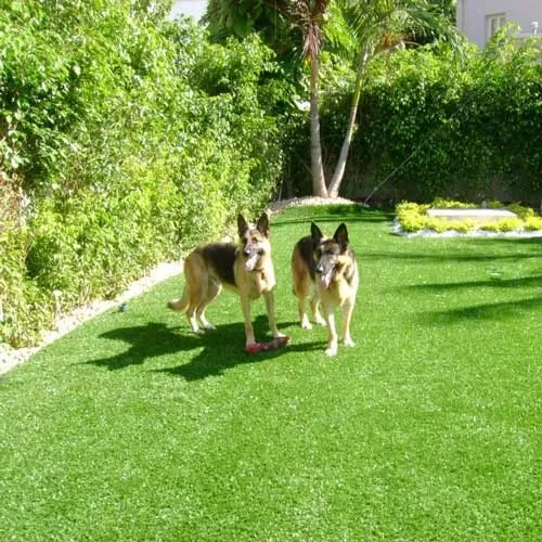 artificial turf for dog agility