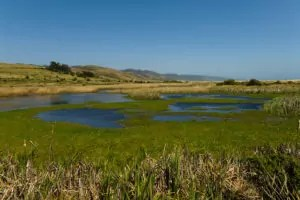 California: Wetlands near Limantour Beach at Point Reyes National Seashore near San Francisco. Photo copyright Lee Foster. Photo # casanf81451