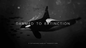 dammed_to_extinction_orca_whale