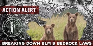 Bear_Action_Alert_Masthead