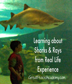 Science and Sharks