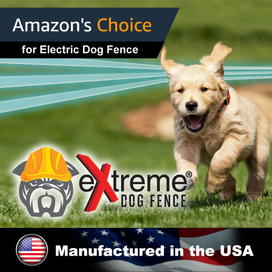 Dog training inside an electric fence