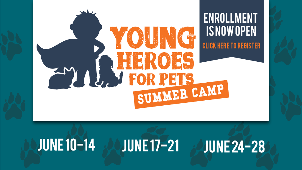 2019 Young Heroes Camp
