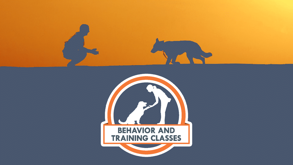 Behavior and Training Classes