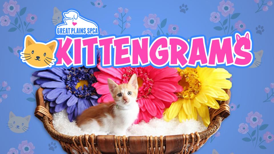 Kittengrams
