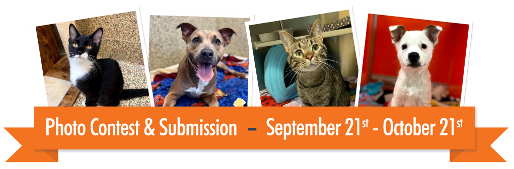 Best in Show - Photo Contest and Submission 9-21_10-21