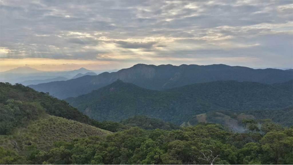 Mount Mabu Rain Forest, Africa