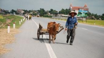 Vietnamese man with ox-driven cart