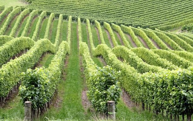 Vineyard in Spain