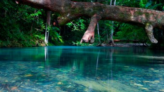 Seductive blue water of Cooper creek in Daintree Forest, Port Douglas