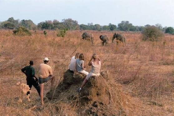 Watching elephants on a safari