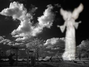 Angel_09073