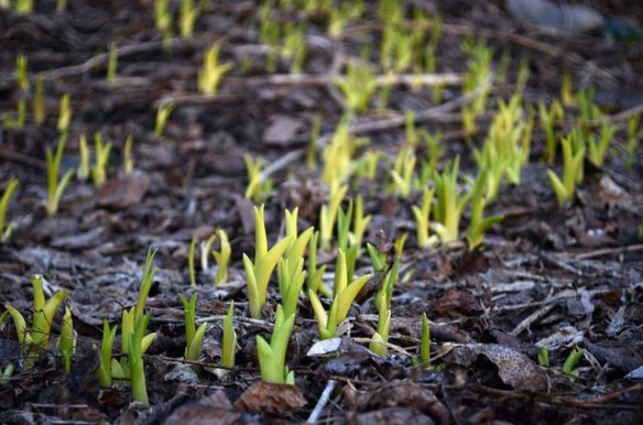 the first green shoots of spring