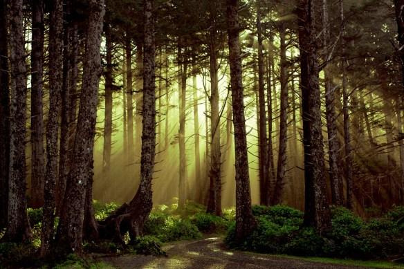 god light nature
