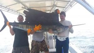 sailfish2a