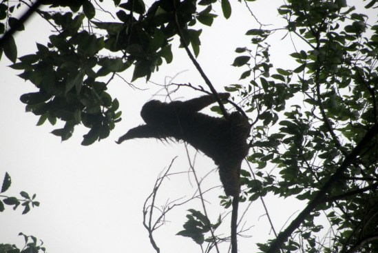 Manuel Antonio, Quepos, Costa Rica