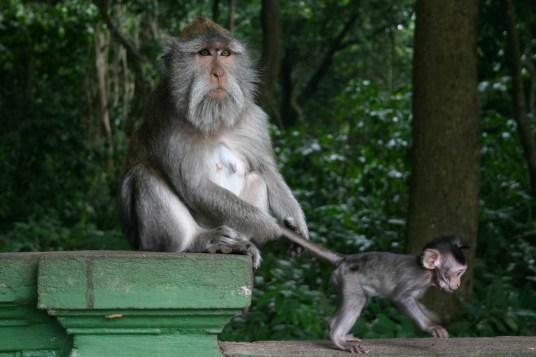 monkey forest, bali, ubud, indonesia
