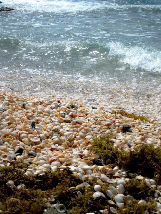 shells singerisland palm beach