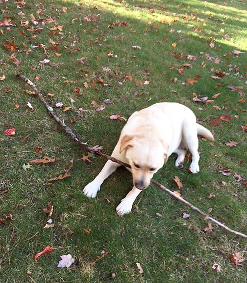 wood-branches_dog-toy