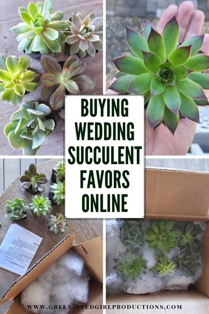 I Bought Succulent Wedding Favors Online through Amazon and here is how it went. If you're planning a Boho Wedding Theme and want to do Succulent Wedding Favors, here is what you need to know.