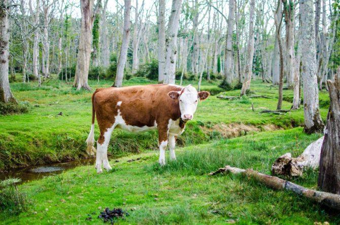 agrolesnictwo-rozwiazania-dla-poprawy-klimatu