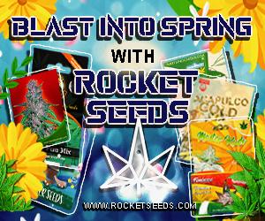 Rocket Seeds - Blast Into Spring With Rocket Seeds