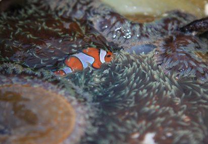 Fish in the Andaman Sea in Koh Tachai