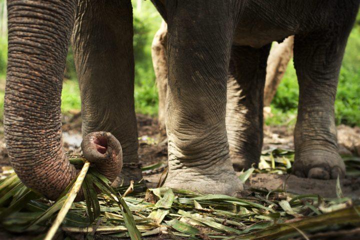 Elephant Trekking in Sai Roong Elephant Camp