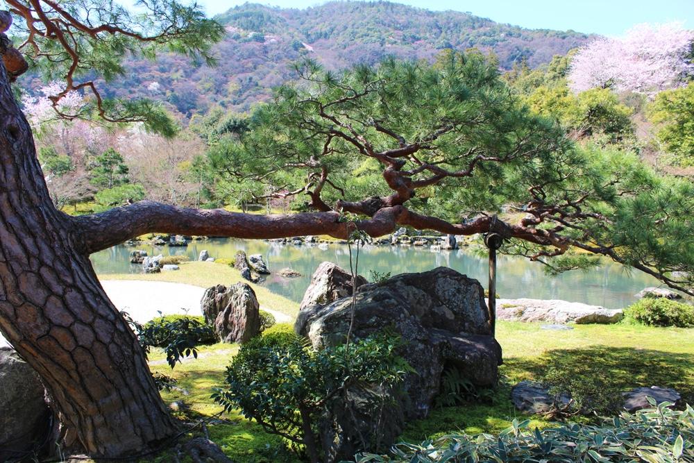 Tenryuji-Temple-Garden