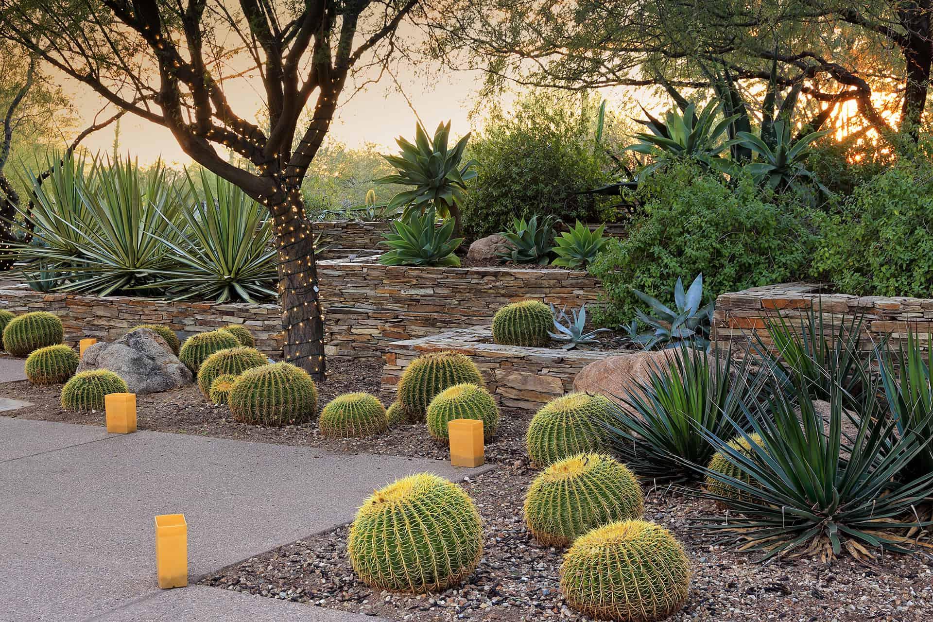 15 Amazing Desert Landscaping Ideas | Green and Vibrant on Desert Landscape Ideas For Backyards id=60250