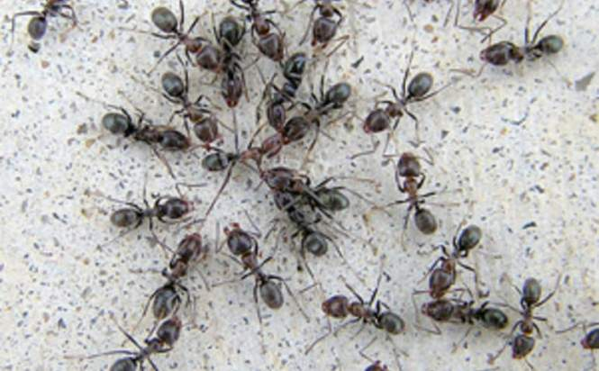 Ant Etiquette