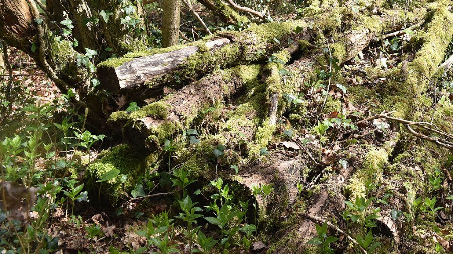 Woodland log pile for wildlife