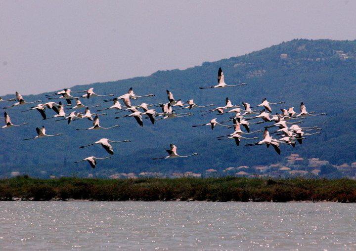birds of corfu