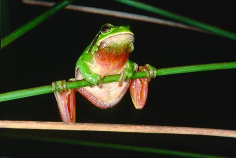 Montado sobro_biodiversidade_5