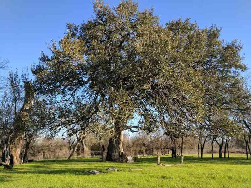 Countryside Memorial in La Vernia, TX